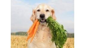 Витамины и пищевые добавки для собаки